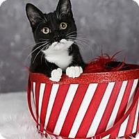 Adopt A Pet :: Calla Lily - Eagan, MN