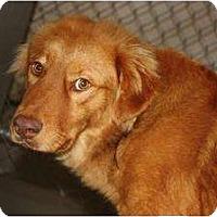Adopt A Pet :: Reno - New Boston, NH