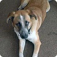 Adopt A Pet :: Sweet Sue - Alliance, NE