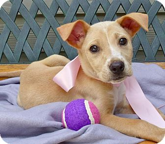 Terrier (Unknown Type, Medium) Mix Puppy for adoption in Baton Rouge, Louisiana - Chloe