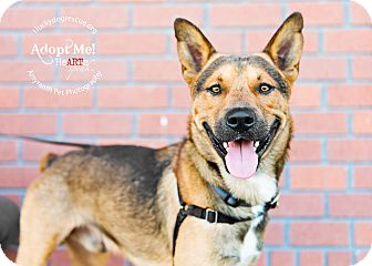 Shepherd (Unknown Type) Mix Dog for adoption in Pleasanton, California - Hansel-Adoption Pending
