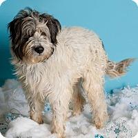 Adopt A Pet :: Matthew - Phoenix, AZ
