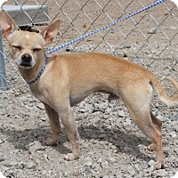 Adopt A Pet :: Bugzy - Greeley, CO