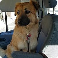 Adopt A Pet :: Beautiful - Las Vegas, NV
