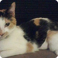 Adopt A Pet :: MINNIE PURR - Powder Springs, GA