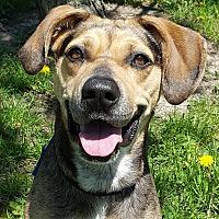 Adopt A Pet :: Roxette - Grayslake, IL