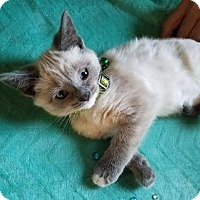 Adopt A Pet :: Misha - Ortonville, MI