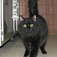 Adopt A Pet :: Casino - Ruidoso, NM
