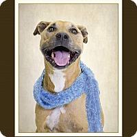 Adopt A Pet :: Taffy - New Smyrna Beach, FL