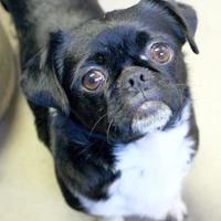 Adopt A Pet :: Henry - Enterprise, AL