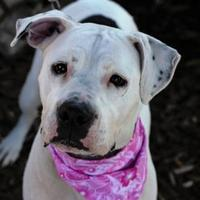 Adopt A Pet :: Blanca - LaBelle, FL