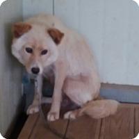 Adopt A Pet :: Sandy - Oakton, VA