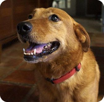 Golden Retriever Mix Dog for adoption in Pipe Creed, Texas - Brandy