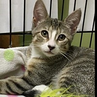 Adopt A Pet :: Pearl - Great Neck, NY