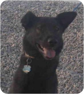 German Shepherd Dog Mix Dog for adoption in Las Vegas, Nevada - Ben