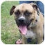 Photo 4 - Boxer Dog for adoption in W. Columbia, South Carolina - Haley