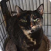 Adopt A Pet :: Christina - Frederick, MD