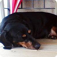 Adopt A Pet :: Lilou - Toronto, ON
