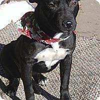 Adopt A Pet :: **Shorty** - Stockton, CA