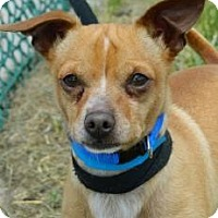 Adopt A Pet :: Dynamo - Cheyenne, WY