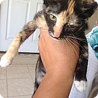 Adopt A Pet :: Tara - Lakewood, CA