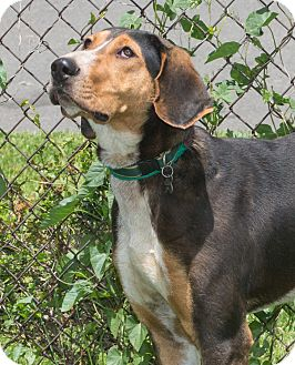 Hound (Unknown Type) Mix Dog for adoption in Elmwood Park, New Jersey - Toaster