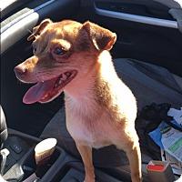 Adopt A Pet :: Crackers - Creston, CA