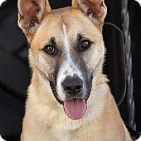 Adopt A Pet :: Jack von Joachimstal - Los Angeles, CA