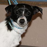 Adopt A Pet :: CC - Prosser, WA