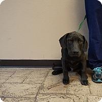 Adopt A Pet :: Jaguar - Oviedo, FL