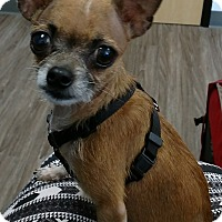 Adopt A Pet :: Minnie - San Diego, CA