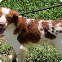 Adopt A Pet :: Pantelis - Washington, DC