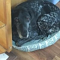 Adopt A Pet :: Ella - Ogden, UT