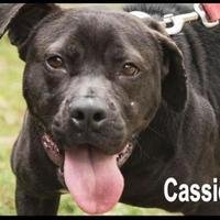Retriever (Unknown Type) Mix Dog for adoption in West Columbia, South Carolina - Cassie