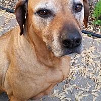 Adopt A Pet :: Cade  ♥ - Livonia, MI