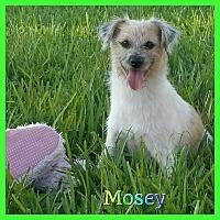 Adopt A Pet :: Mosey - Hollywood, FL