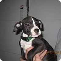 Adopt A Pet :: Tiny - Medora, IN