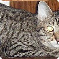 Adopt A Pet :: Richie - Kensington, MD