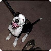 Adopt A Pet :: Nova - Indianapolis, IN