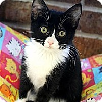 Adopt A Pet :: Vienna - Mobile, AL