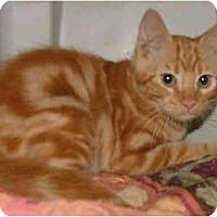 Adopt A Pet :: Sunshine - Dallas, TX