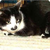 Adopt A Pet :: Buddy - Alexandria, VA