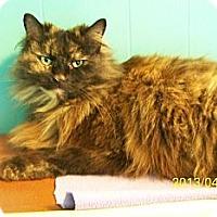 Adopt A Pet :: Jinx - Dover, OH