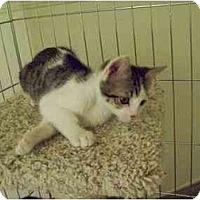 Adopt A Pet :: Dusty - Davis, CA