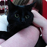 Adopt A Pet :: Carmen (amazing green eyes) - Sterling Hgts, MI
