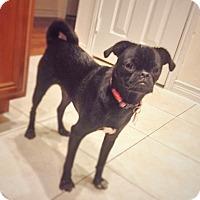 Adopt A Pet :: Wiggles - Austin, TX