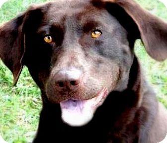 Labrador Retriever Dog for adoption in Winchester, Kentucky - GYPSY(PLAYFUL-FUN-SO SMART!!