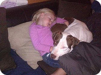 American Staffordshire Terrier Mix Dog for adoption in Decatur, Georgia - Athena URGENT!
