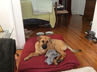 German Shepherd Dog/Terrier (Unknown Type, Medium) Mix Dog for adoption in Birmingham, Alabama - Behr