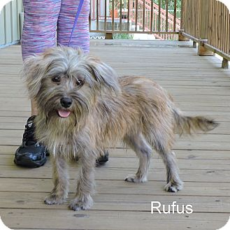Terrier (Unknown Type, Medium) Mix Dog for adoption in Slidell, Louisiana - Rufus